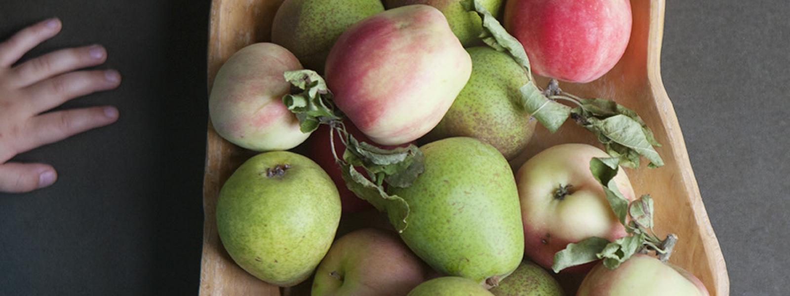 Smulpaj på äpple och päron