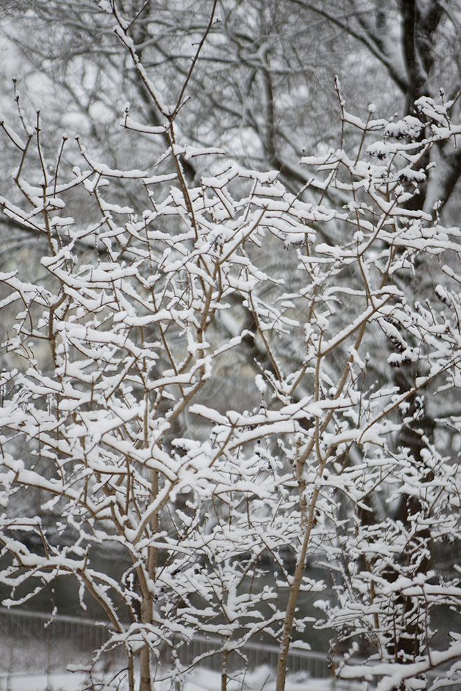 Vinterfint, vinter, naturbilder