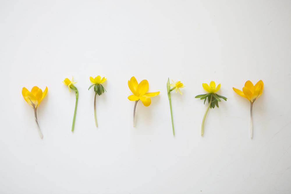 Blommor-2L