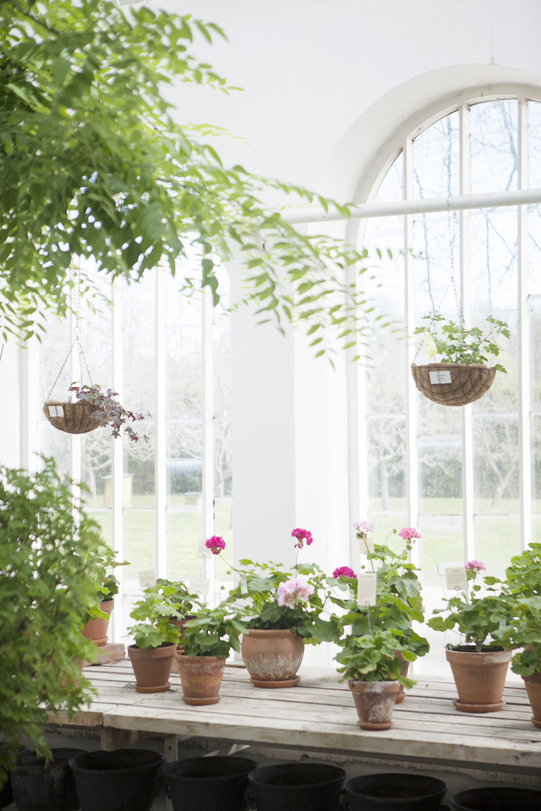 Amelie von Essen, Julita växthus, julita gård, familjeutflykt, trädgård, vackra orangerier.